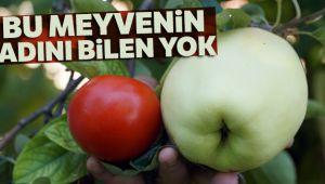 Bu meyvenin adını bilen yok