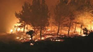 PKK 10 milyon ağaç yaktı