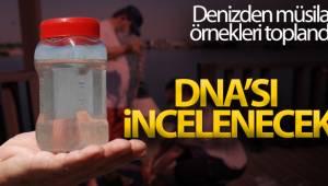 Müsilaja neden olan mikroorganizmaların DNA'sı incelenecek